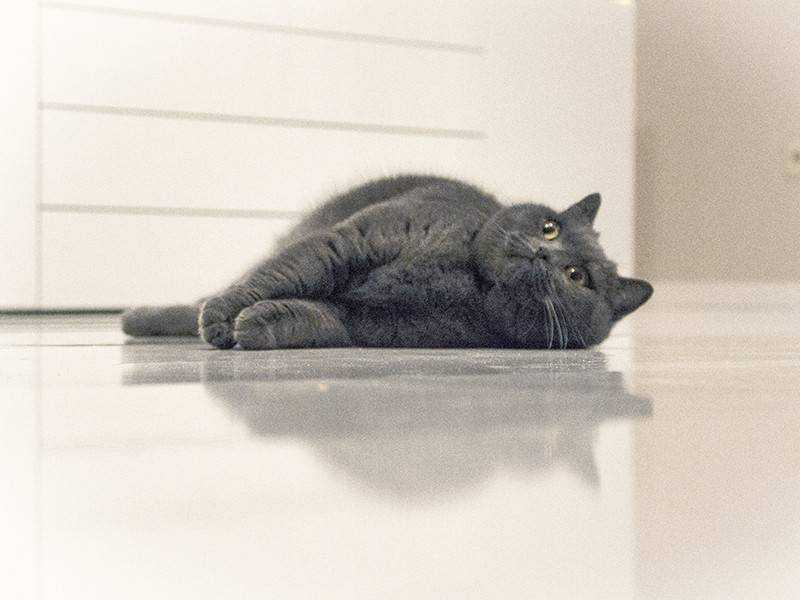 Epoxidharz Fußboden Gießen ~ Weißer glänzender fußboden im wohnzimmer kein problem